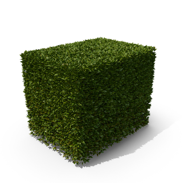 Hedge Shrub PNG & PSD Images