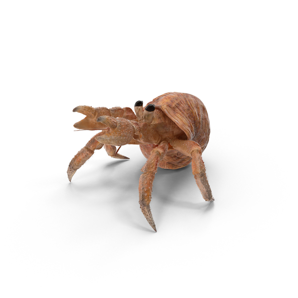 Hermit Crab Object