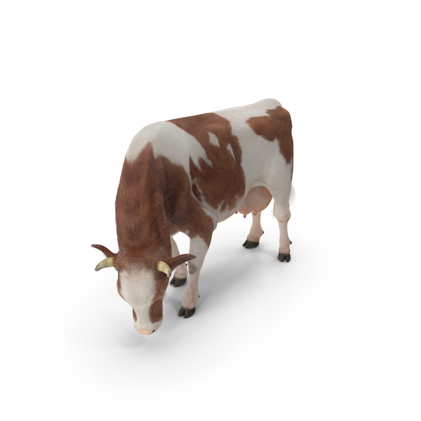 Holstein Cow Eating Pose with Fur PNG & PSD Images