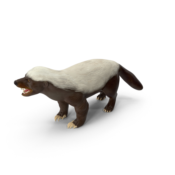 Honey Badger PNG & PSD Images