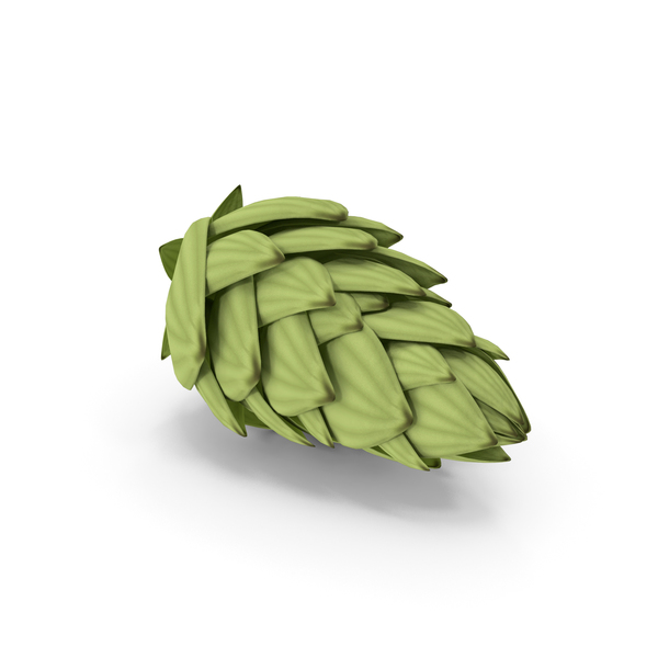 Hop Cone PNG & PSD Images