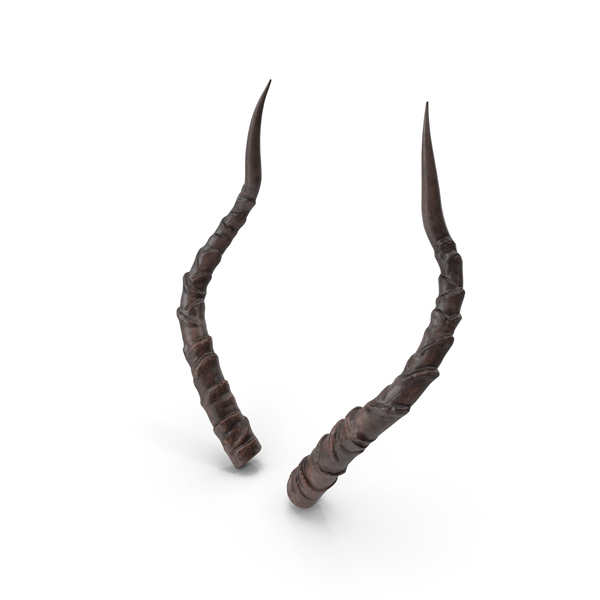 Animal: Horns PNG & PSD Images