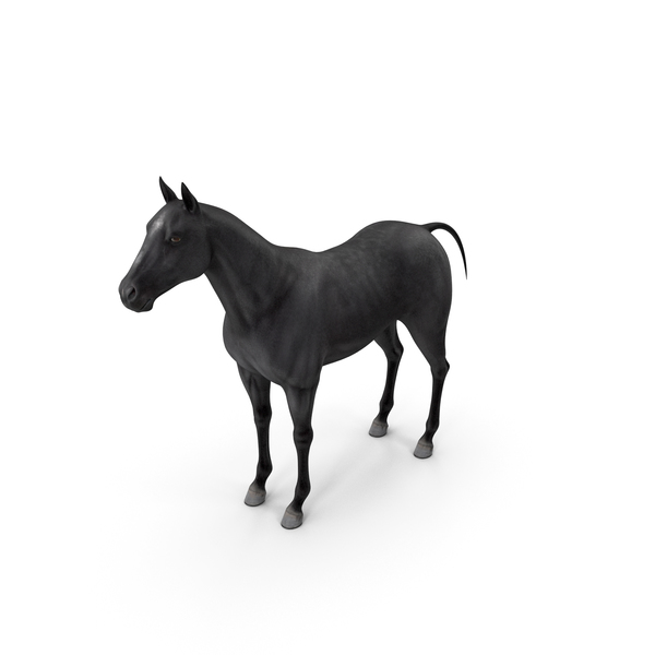 Horse Black PNG & PSD Images