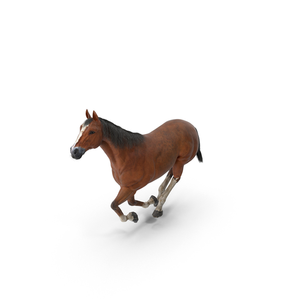Horse Galloping PNG & PSD Images