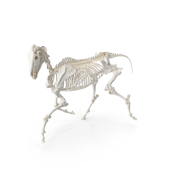 Horse Skeleton Running Pose PNG & PSD Images