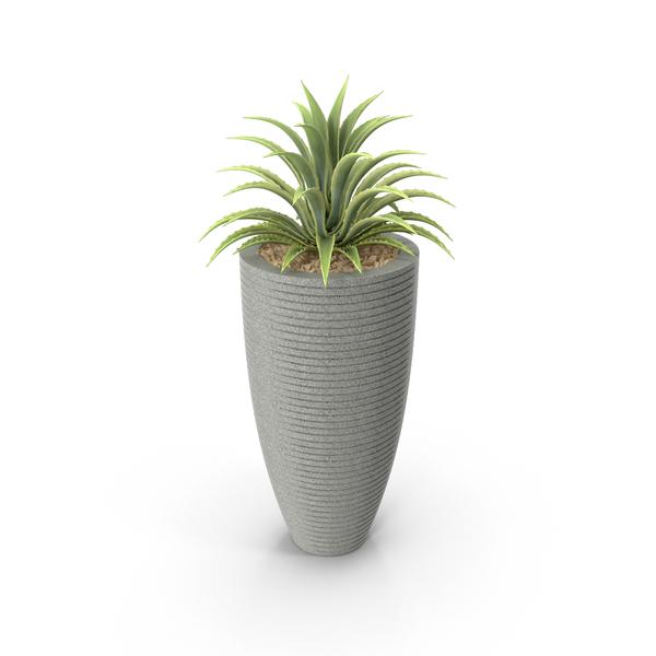 Flower Pot: House Plant PNG & PSD Images
