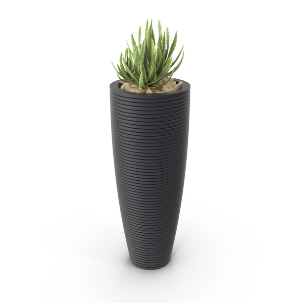 Flower Pot: House Plant PNG & PSD Images