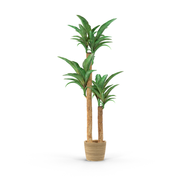 Plants: Houseplant PNG & PSD Images