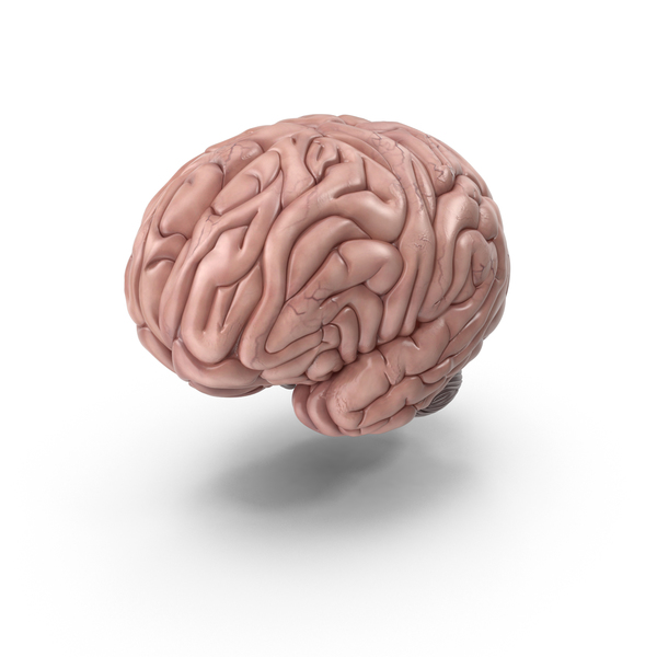 Human Brain PNG & PSD Images