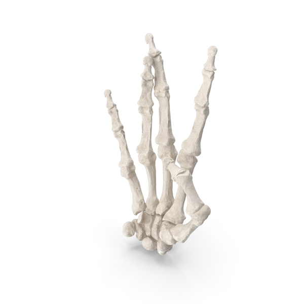 Gestures: Human Hand Bones White West Side Sign PNG & PSD Images