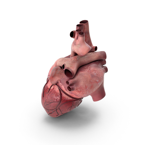 Human Heart PNG & PSD Images