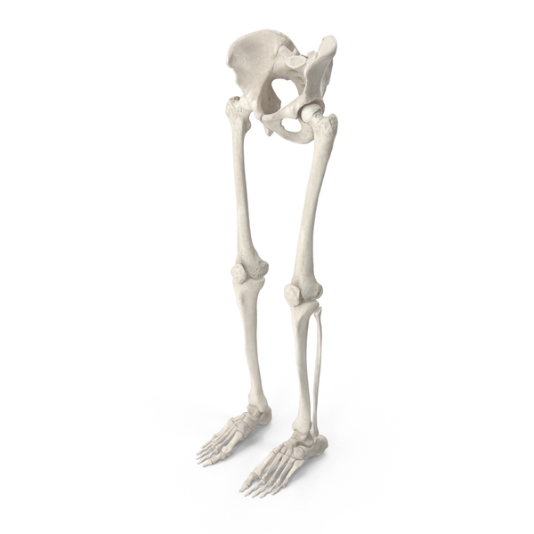 Human Legs and Pelvis Bones PNG & PSD Images