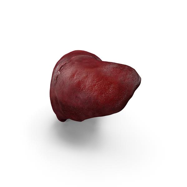 Human Liver PNG & PSD Images