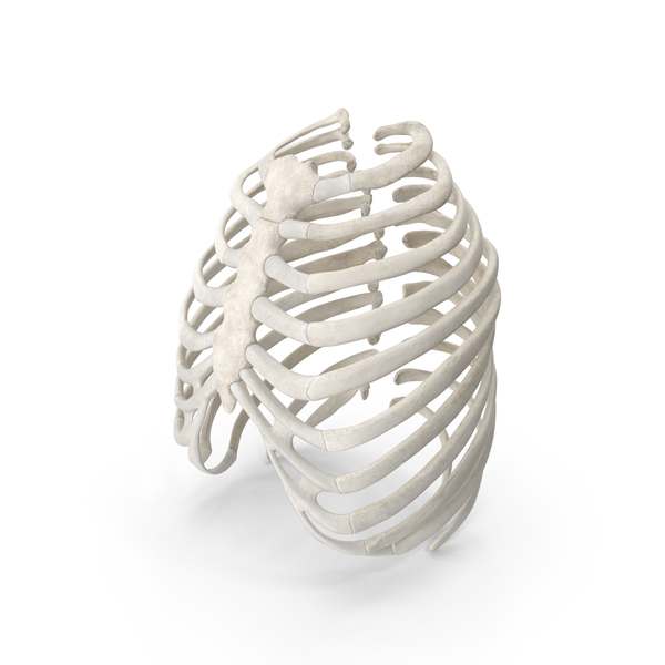 Human Rib (Thoracic) Cage PNG & PSD Images