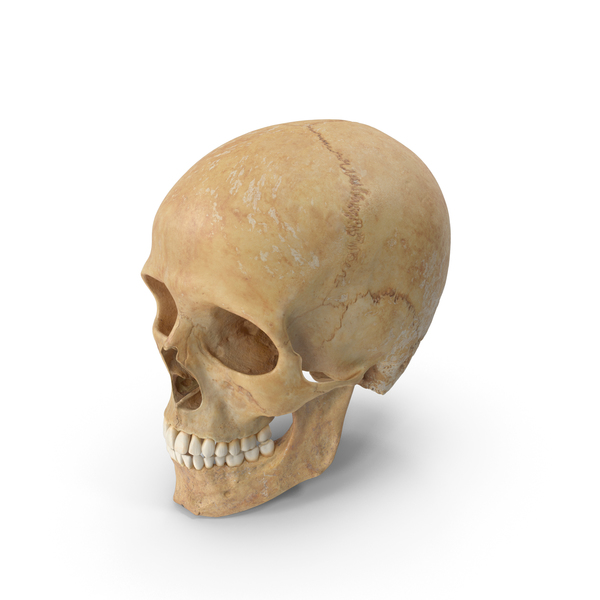 Human Skull (Cranial) 01 With Teeth PNG & PSD Images