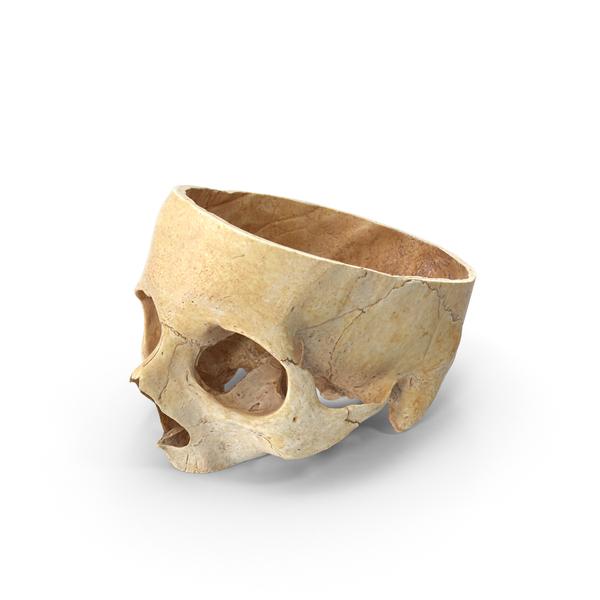 Human Skull Cranial Cut PNG & PSD Images