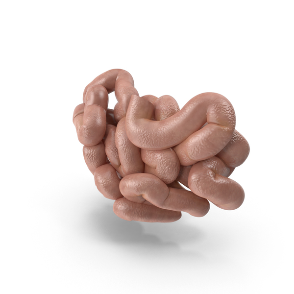 Human Small Intestine PNG & PSD Images
