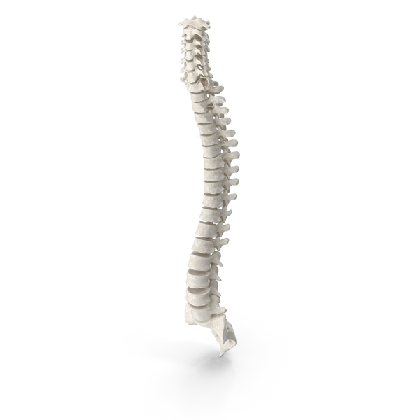Human Spine PNG & PSD Images