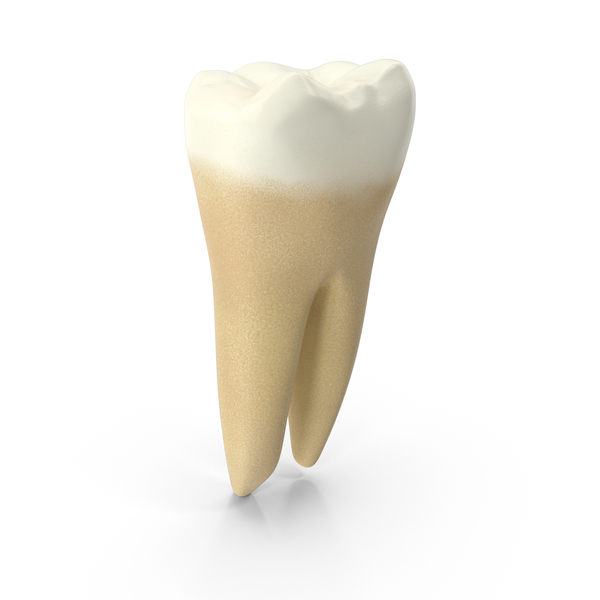 Human Tooth Lower First Molar PNG & PSD Images