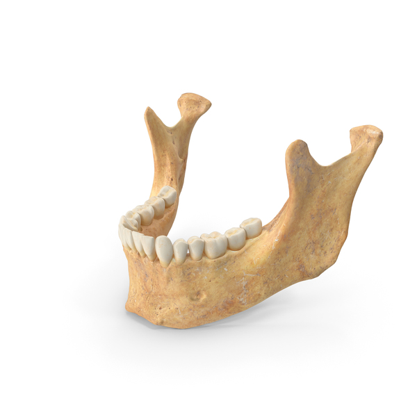 Jaw: Human Woman Jawbone ( Mandible ) With Teeth PNG & PSD Images