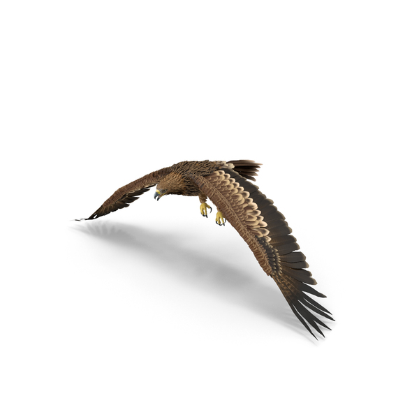 Imperial Eagle Flapping PNG & PSD Images