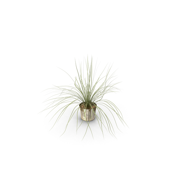 Indoor Plant with Long Leaves in a Pot PNG & PSD Images