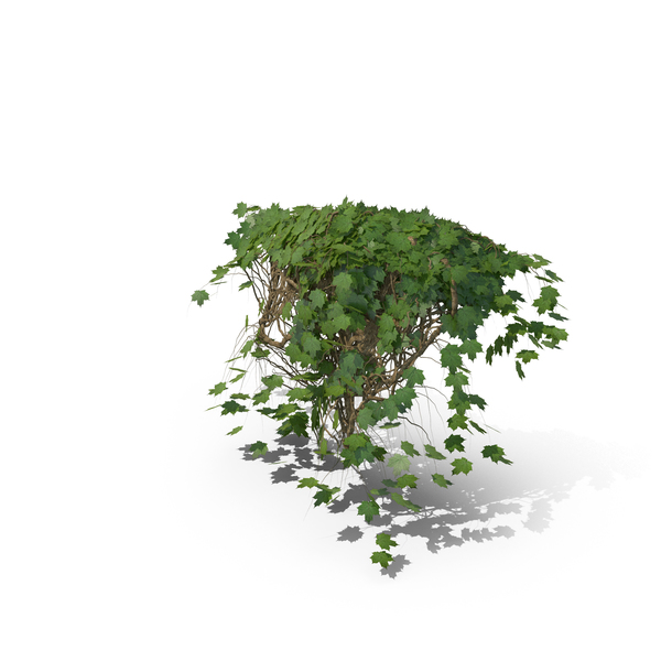 Ivy PNG & PSD Images