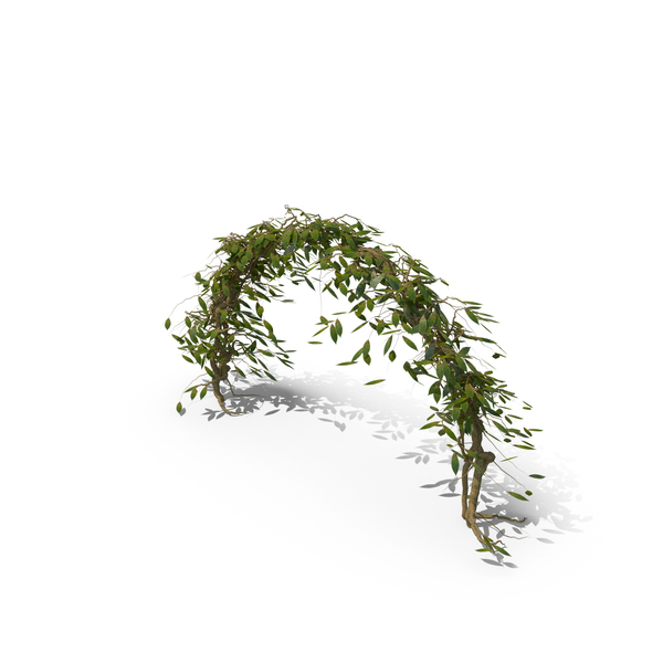 Ivy Arch PNG & PSD Images