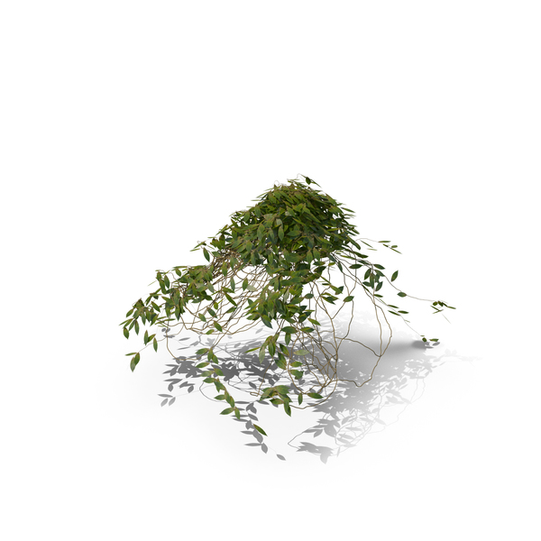 Ivy Cluster PNG & PSD Images