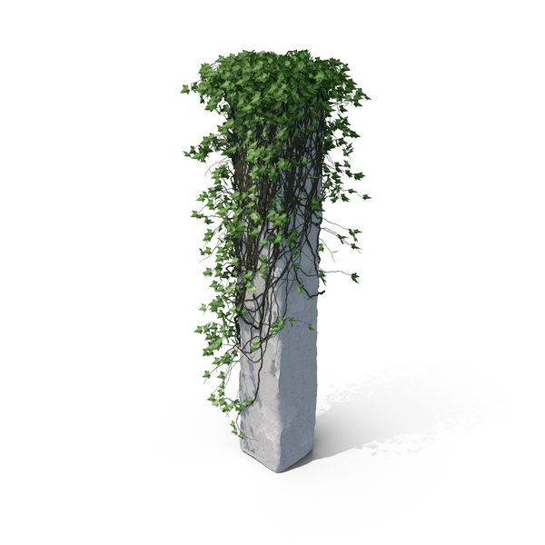 With: Ivy Column PNG & PSD Images