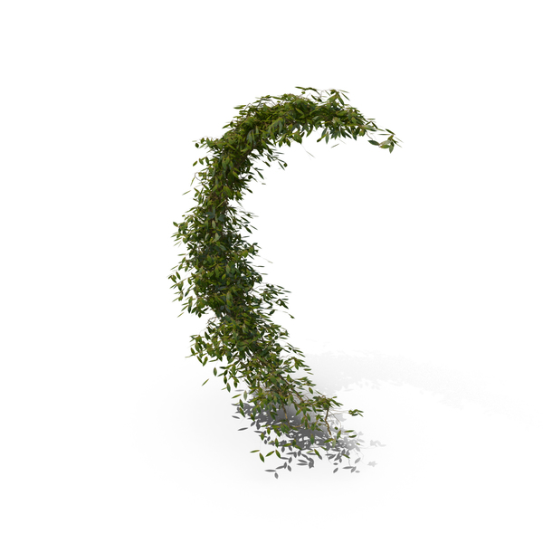 Ivy Curved Shape PNG & PSD Images