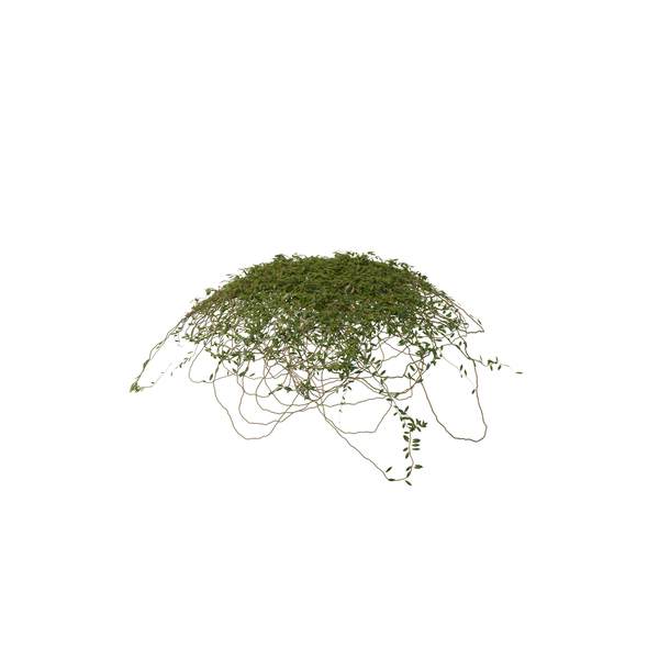 Ivy Dome Shape PNG & PSD Images