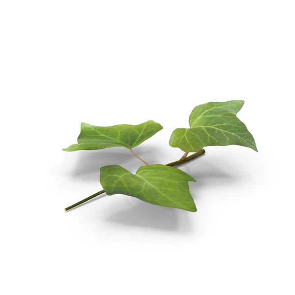 Ivy Leaf Object