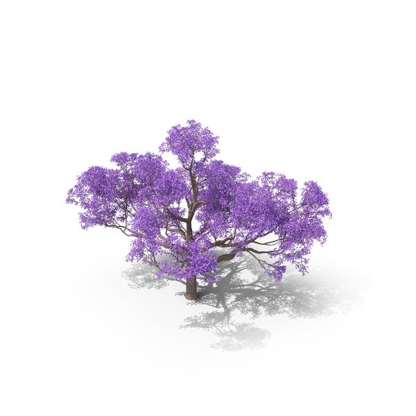 Jacaranda Tree PNG & PSD Images