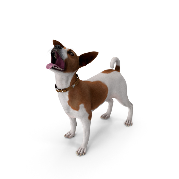 Jack Russell Terrier Spotted Waiting Pose PNG & PSD Images