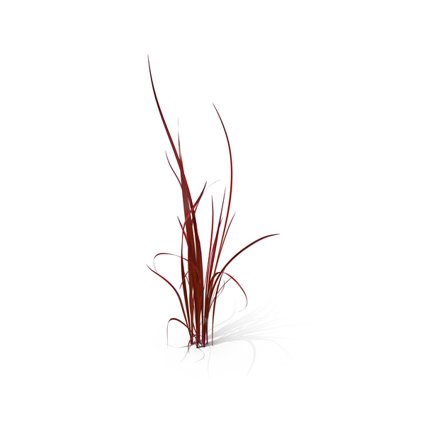 Japanese Blood Grass PNG & PSD Images