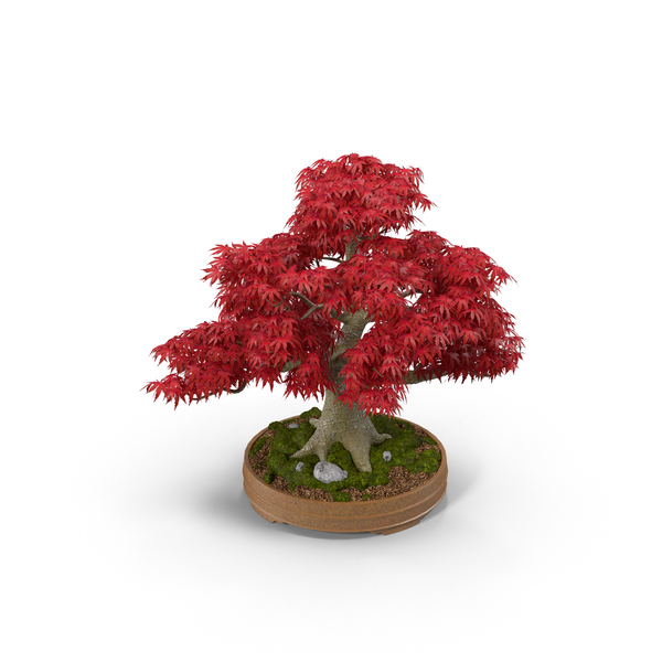 Japanese Maple Tree Statue PNG & PSD Images