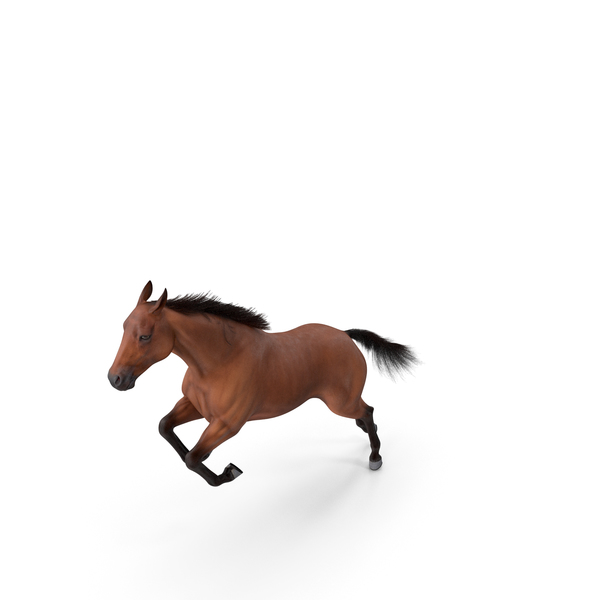 Jumping Bay Horse Fur PNG & PSD Images