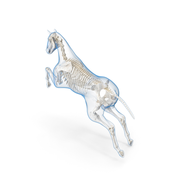Jumping Horse Envelope with Skeleton PNG & PSD Images