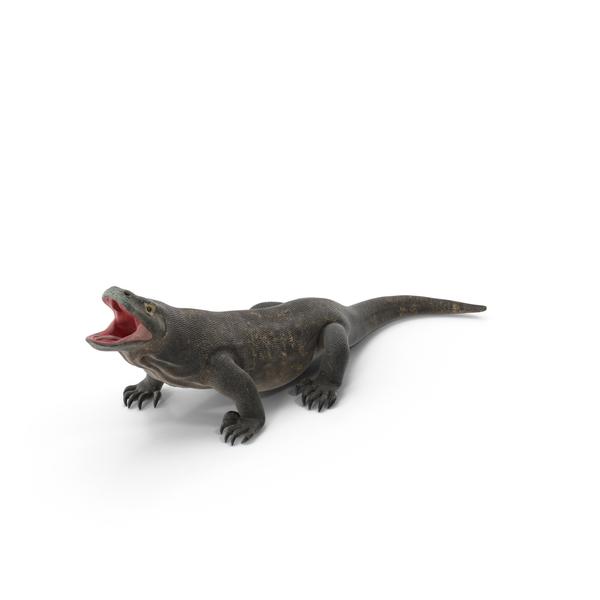 Komodo Dragon PNG & PSD Images