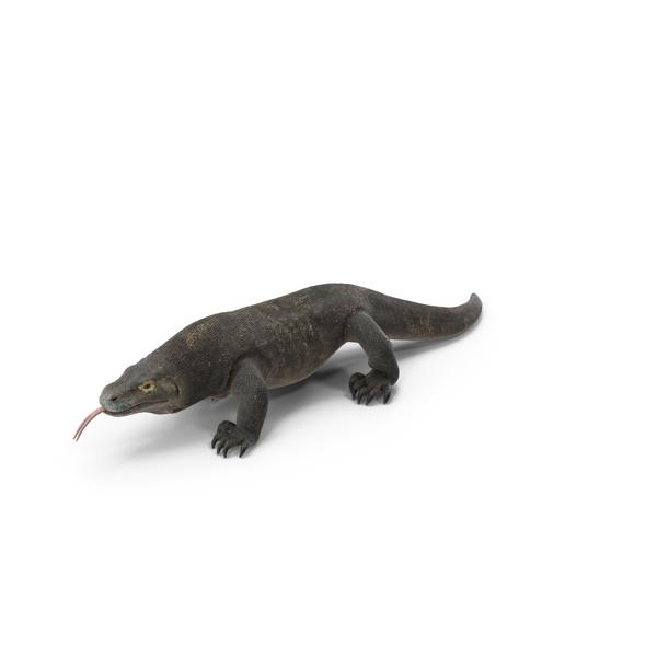Komodo Dragon Walking Pose PNG & PSD Images