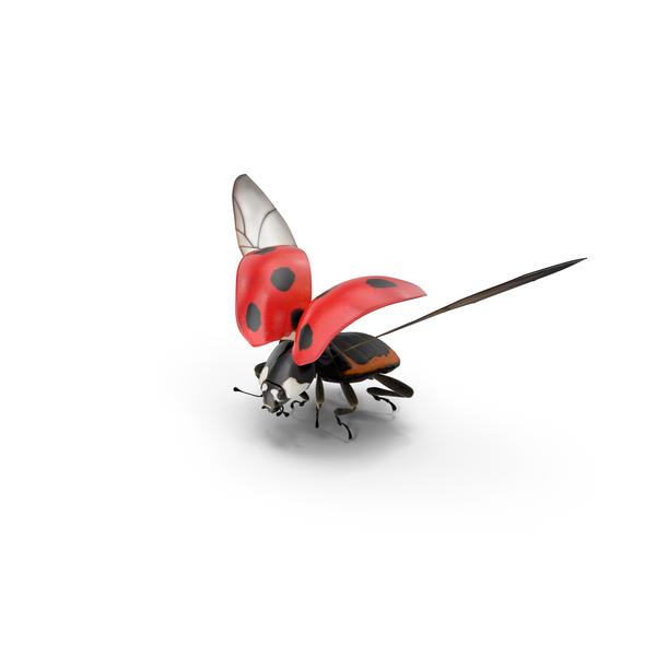 Ladybug Flying PNG & PSD Images