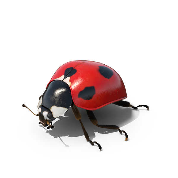 Ladybug in Outdoor Lights PNG & PSD Images