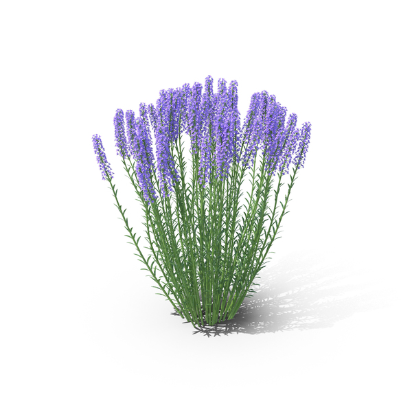 Lavender Object