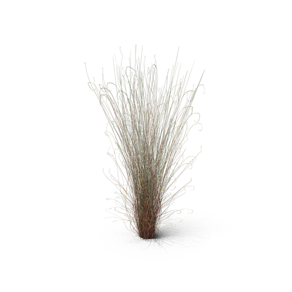 Grasses: Leatherleaf Sedge PNG & PSD Images
