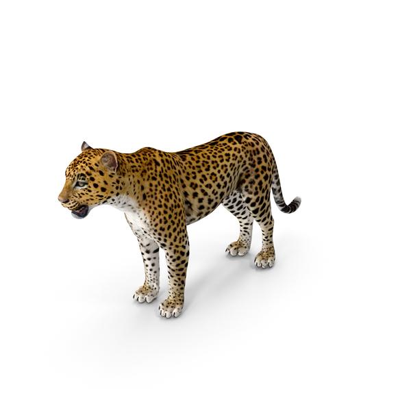 Leopard PNG & PSD Images
