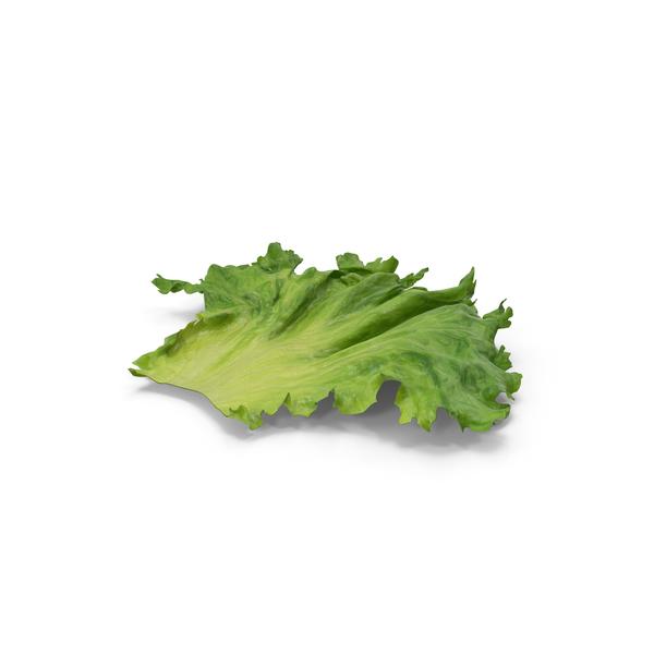 Lettuce PNG & PSD Images