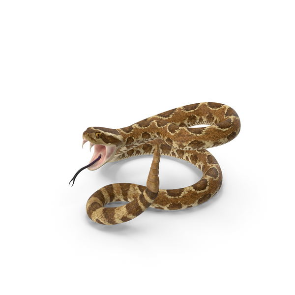 Light Rattlesnake Attack Pose PNG & PSD Images