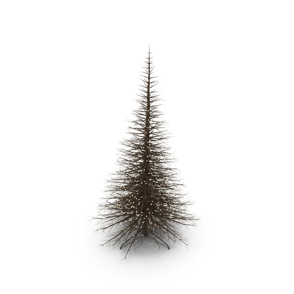 Christmas: Light Tree PNG & PSD Images