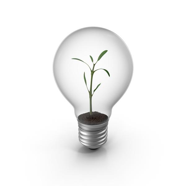 Lightbulb Plant PNG & PSD Images